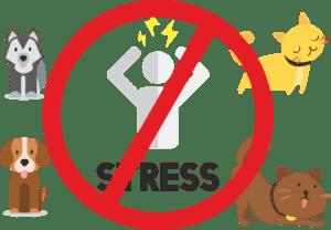 Стрижка собак без стрессов и волнений
